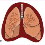 Lungs Coloring Page Beautiful Stock How To Draw Lungs