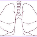 Lungs Coloring Page Best Of Collection How To Draw Lungs Step By Step Anatomy People Free