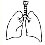 """Lungs Coloring Page Best Of Stock """"smokers Cough"""""""