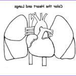 Lungs Coloring Page Cool Photos Coloring Page Heart And Lungs