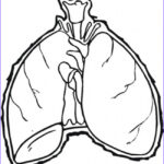 Lungs Coloring Page New Stock Lungs Coloring Page Free Body Coloring Pages