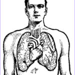 Lungs Coloring Page Unique Collection Coloring Page Lungs Img