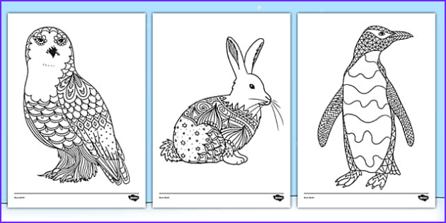 t t arctic animals mindfulness colouring sheets