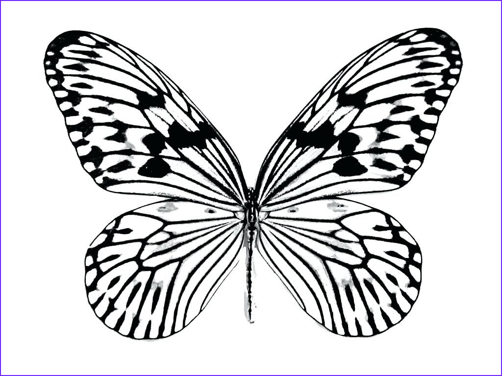 Monarch butterfly Coloring Pages Best Of Collection Monarch butterfly Coloring Pages to Print