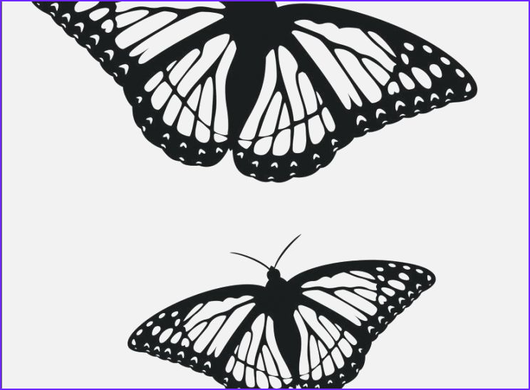best gratifying free printable butterfly