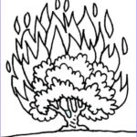 Moses And The Burning Bush Coloring Pages Best Of Image Burning Bush Coloring Page