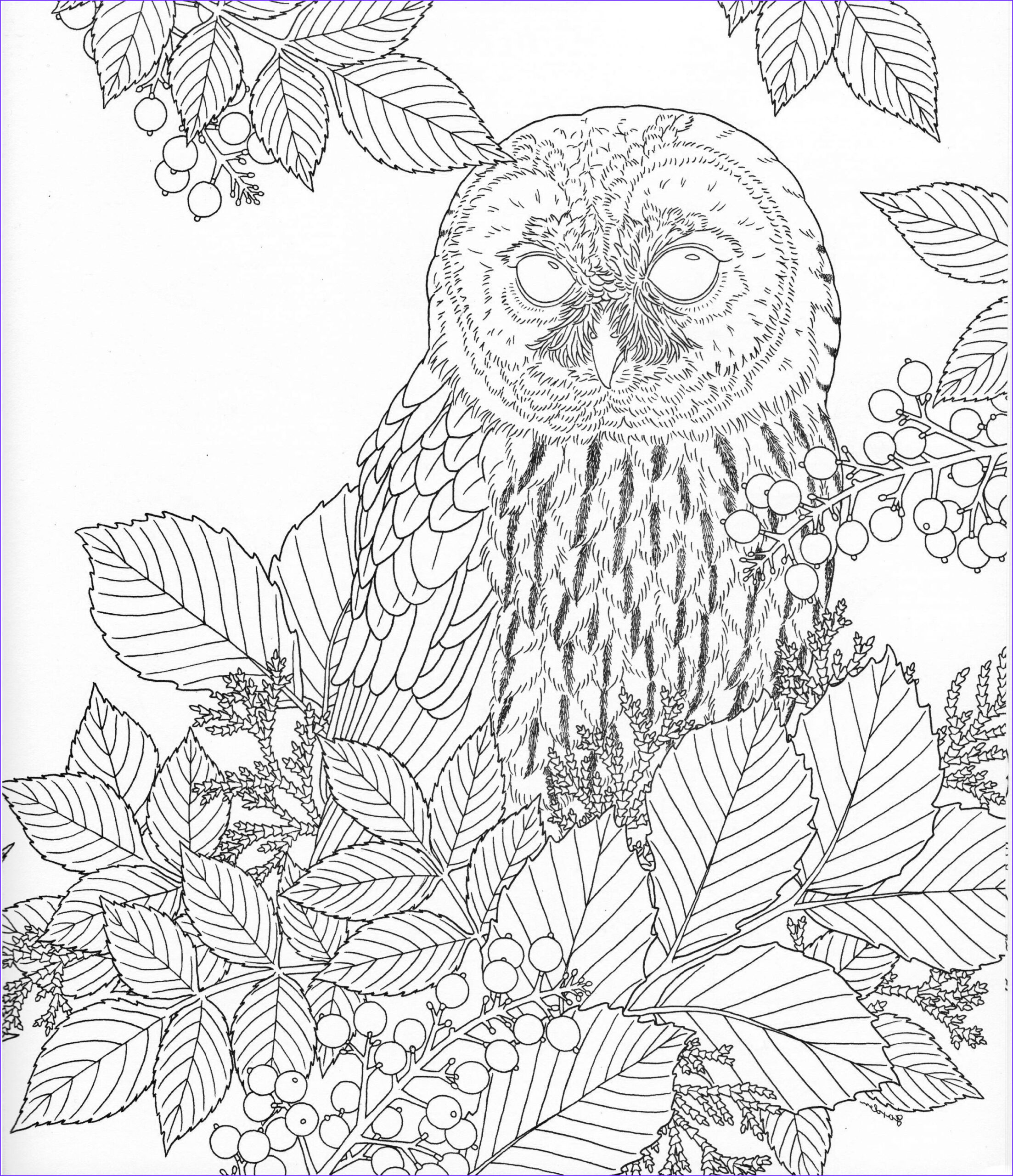 Nature Coloring Book Unique Image Harmony Nature Adult Coloring Book Pg 15