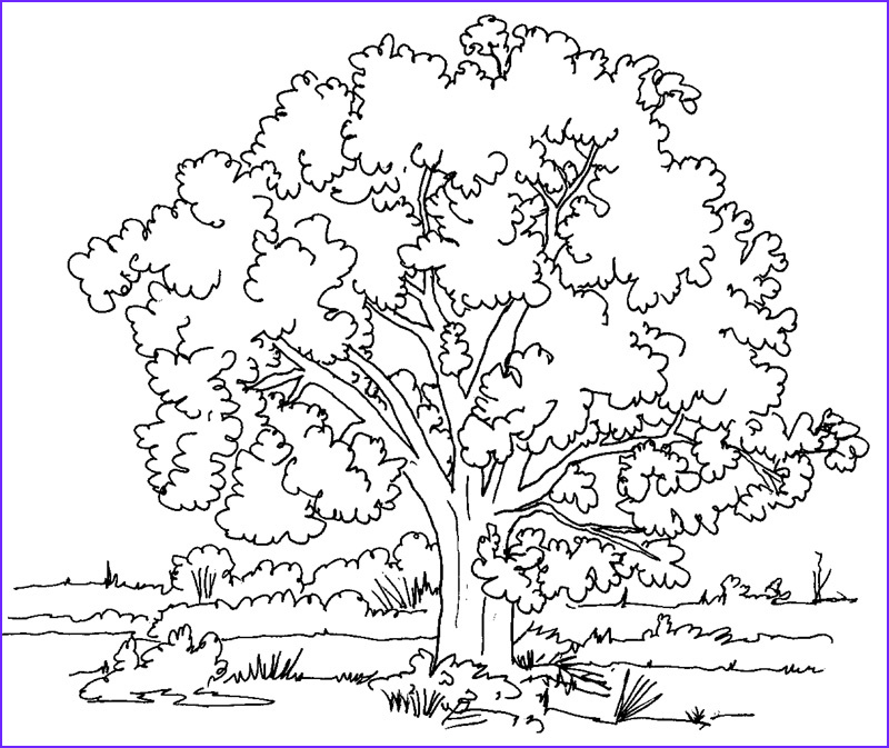 Nature Coloring Book Unique Image Nature Coloring Pages for Adults to Print
