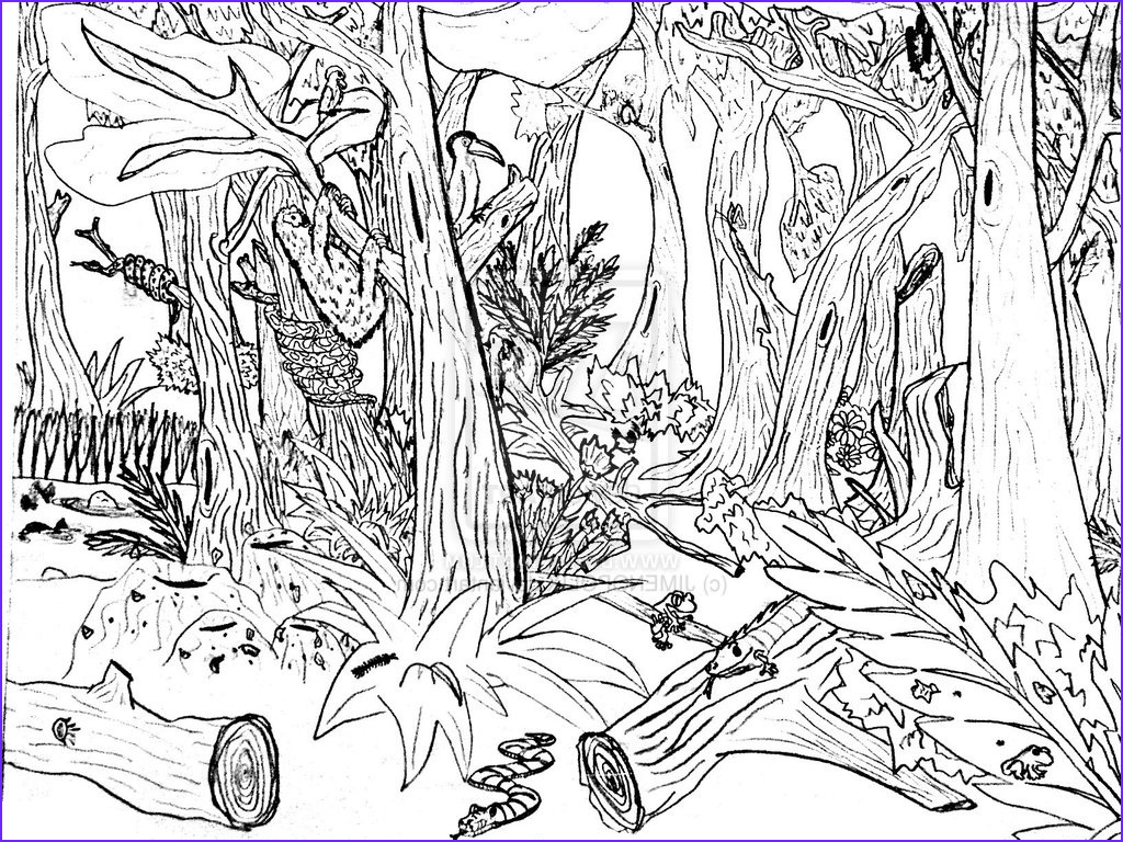 Nature Coloring Book Unique Images Free Printable Nature Coloring Pages for Kids Best