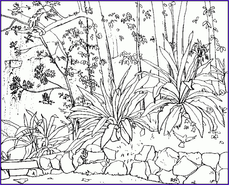 Nature Coloring Pages for Adults Cool Photography Coloring Pages for Adults Nature Gianfreda