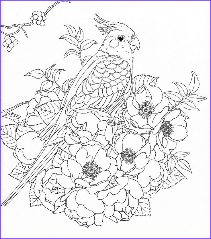 Nature Coloring Pages for Adults Inspirational Photos Harmony Nature Adult Coloring Book Pg 30