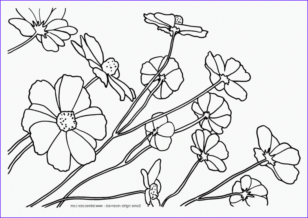nature coloring pages for adults