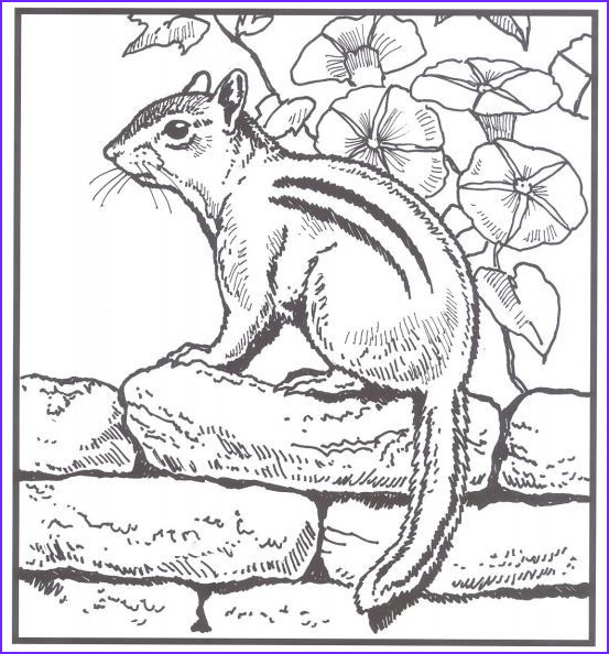 Nature Coloring Pages for Adults Unique Photos Backyard Animals and Nature Coloring Books Free Coloring