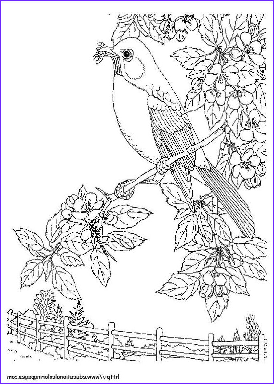 Nature Coloring Pages for Adults Unique Stock Pinterest • the World's Catalog Of Ideas