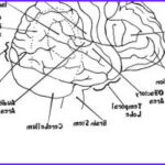 Neuroanatomy Coloring Book Beautiful Stock Blaze Coloring Pages Printable
