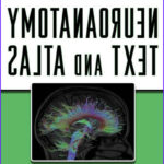 Neuroanatomy Coloring Book Best Of Photography Neuroanatomy Text And Atlas 4th Edition Pdf Medical