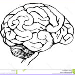 Neuroanatomy Coloring Book Inspirational Photos The Best Free Neuroanatomy Drawing Images Download From