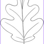 Oak Leaf Coloring Page Awesome Photos 101 Best Arts And Crafts Summer Images On Pinterest