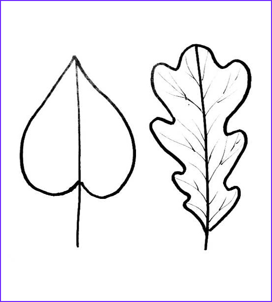Oak Leaf Coloring Page Beautiful Stock Leaf Coloring Pages