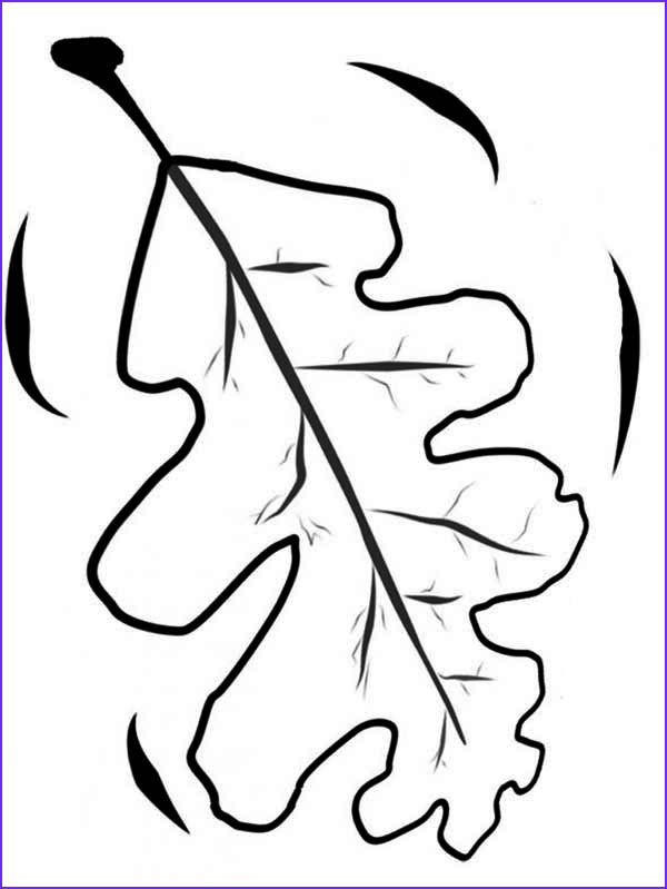oak fall leaf coloring page