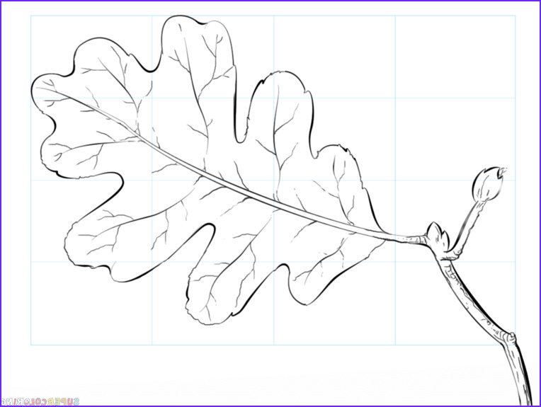 Oak Leaf Coloring Page New Collection How to Draw An Oak Leaf