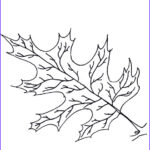 Oak Leaf Coloring Page New Photography Oak Leaf Coloring Pages