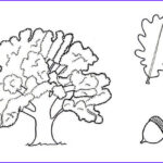 Oak Leaf Coloring Page Unique Images Tree Color Drawing At Getdrawings