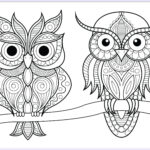 Owl Adult Coloring Pages Cool Stock Two Owls With Simple Patterns On Branch Owls Adult
