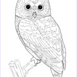 Owl Adult Coloring Pages Inspirational Photos Owl Coloring Pages For Adults Free Detailed Owl Coloring