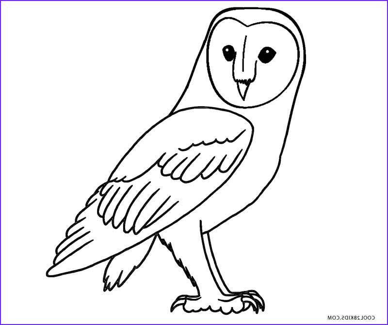 Owl Coloring Beautiful Photos Free Printable Owl Coloring Pages for Kids