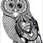 Owl Coloring Book Beautiful Collection 680 Best Coloring Owls Images On Pinterest