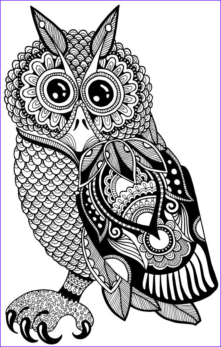 coloring owls