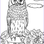 Owl Coloring Book Best Of Photos Free Printable Owl Coloring Pages For Kids