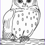 Owl Coloring Book Elegant Photos Free Printable Owl Coloring Pages For Kids