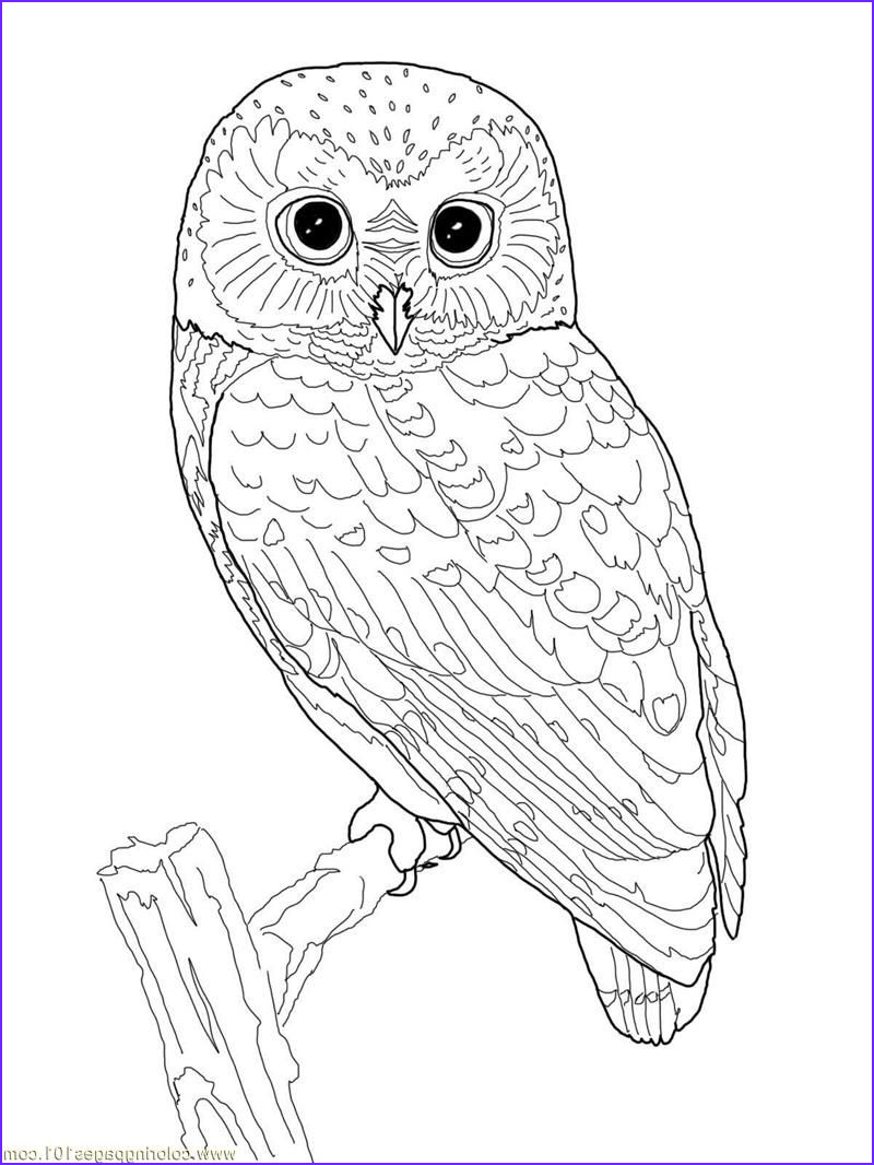 Owl Coloring Book Inspirational Stock Printable Owl Coloring Page