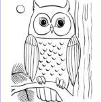 Owl Coloring Book Luxury Image 70 Animal Colouring Pages Free Download & Print