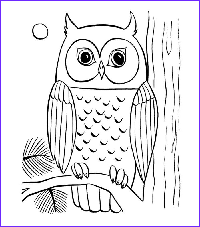 animal colouring page template