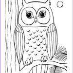 Owl Coloring Book New Photography Coloring Pages Of Owls To Print