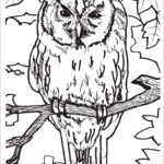 Owl Coloring Book Unique Collection Turbary Woods Fun Stuff