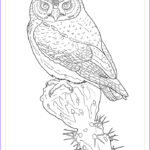 Owl Coloring Book Unique Photography Owls Coloring Book