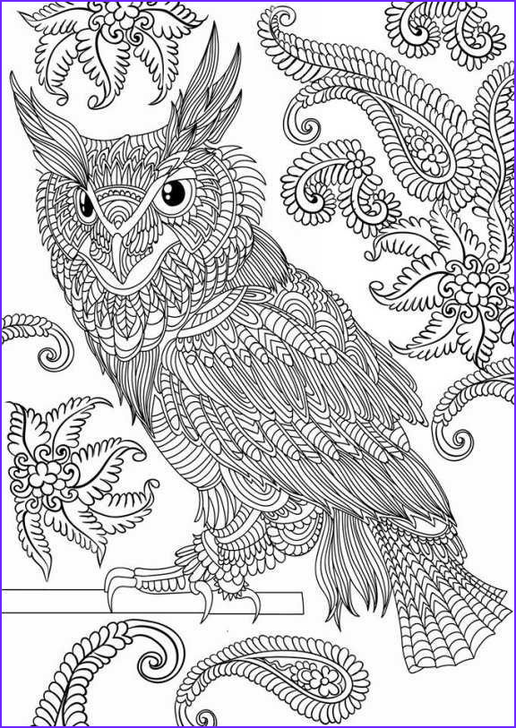 Owl Coloring Books for Adults Beautiful Photos Adult Coloring Book 30 Owl Designs and Paisley Patterns