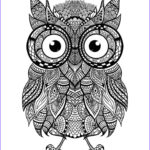Owl Coloring Books For Adults Beautiful Photos Hey Everyone Check Out This Awesome Intricate Owl For