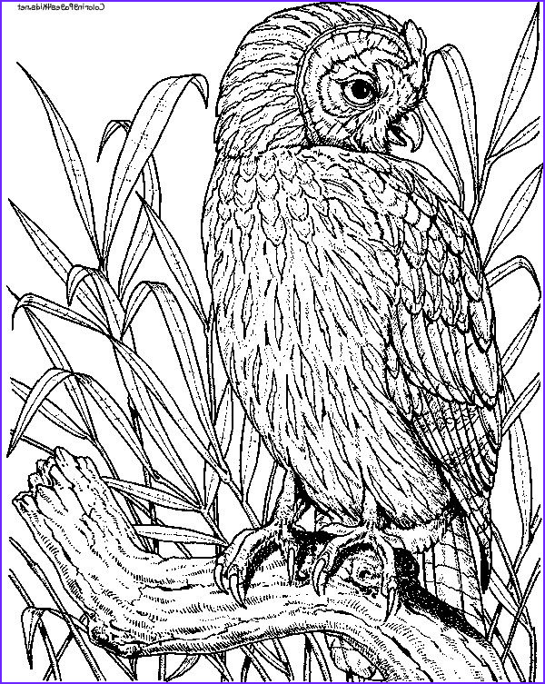 Owl Coloring Books for Adults Luxury Stock Nature Coloring Pages for Adults