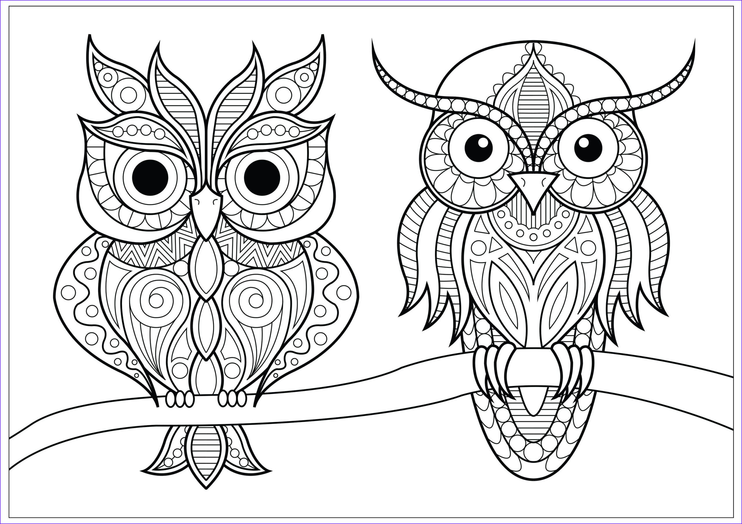image=owls coloring two owls with simple patterns on branch 1