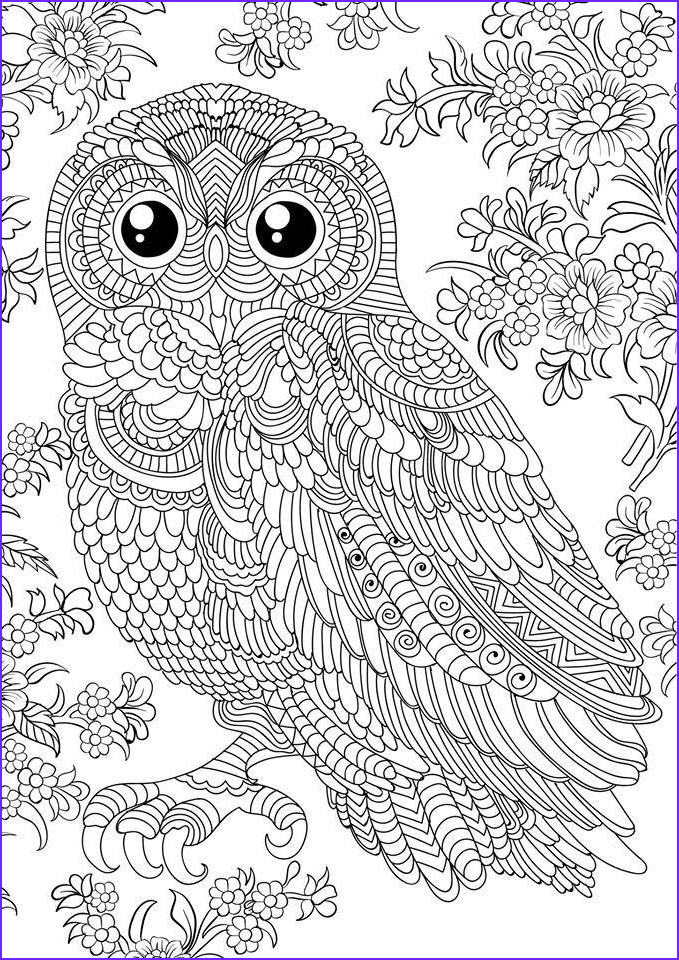 Owl Coloring Pages for Adults Beautiful Image N 679