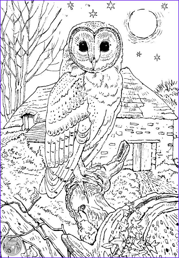 Owl Coloring Pages for Adults Luxury Stock Barn Owl Colouring Page Coloring Pages