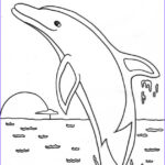 Paint Coloring Pages Beautiful Images Dolphin Paint By Number Dolphin Facts And Information