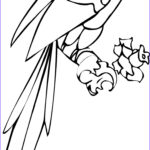 Parrot Coloring Pages Awesome Collection Free Printable Parrot Coloring Pages For Kids