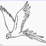 Parrot Coloring Pages Beautiful Photography Printable Parrot Coloring Pages For Kids