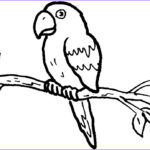 Parrot Coloring Pages Beautiful Stock Free Printable Parrot Coloring Pages For Kids